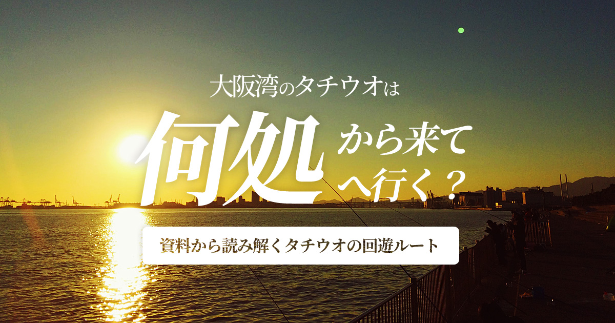 大阪湾のタチウオは何処から来て何処へ行く?