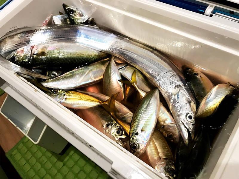 15リットルのクーラーボックスいっぱいに入った秋の魚