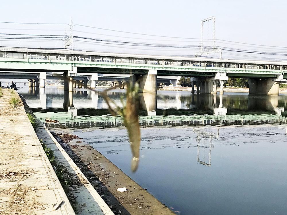 テナガエビと阪神武庫川駅