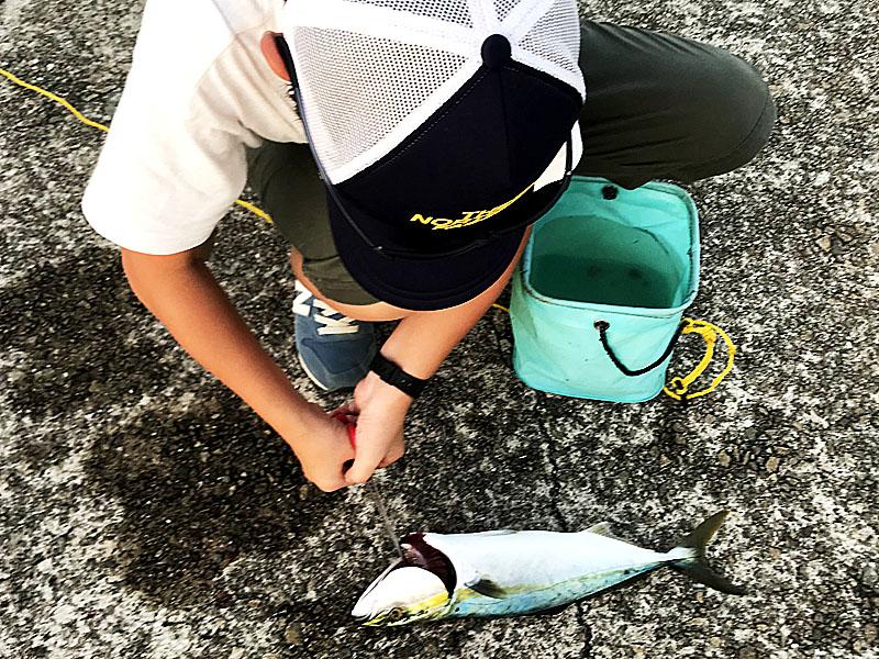 釣り場でハマチの内臓を取る処理をしているところ