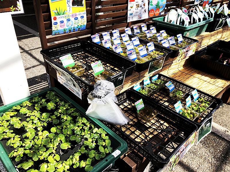 ホームセンターの屋外園芸コーナーにあるメダカ用水草コーナー