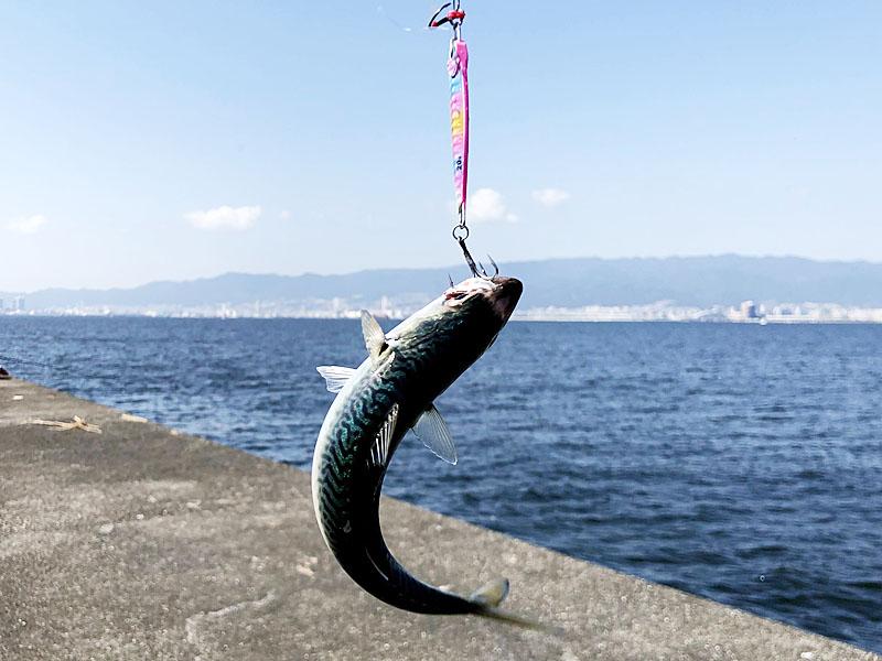 いくらでも釣れる小サバ